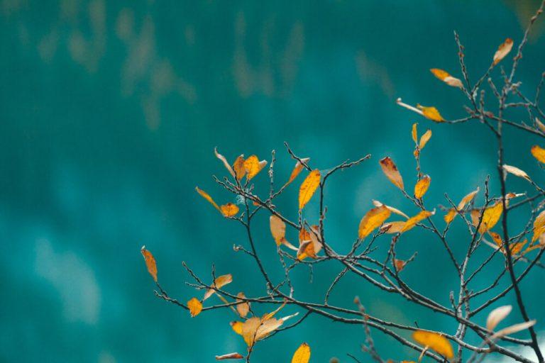 Menopause-leaves