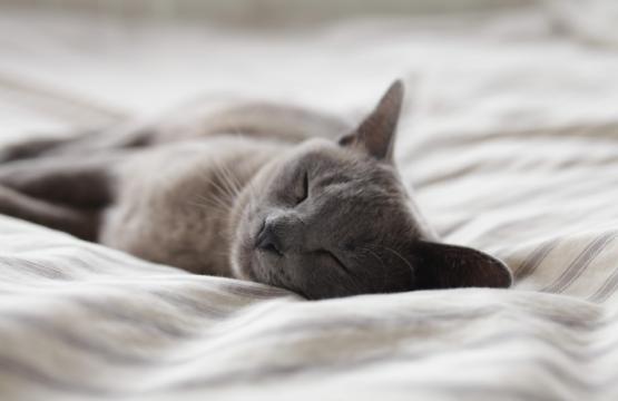 grey cat of depression